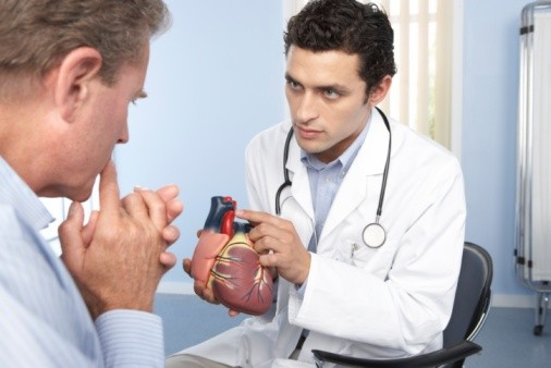 Medical consultation. General practitioner refers to a model of a heart while discussing a patient's condition.