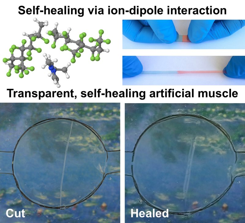 Wolverine-Like Material Can Help Robots Self-Heal