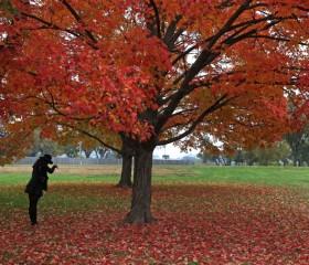fall-foliage-leaves-washington-dc