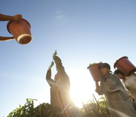 food-chains-immokalee-farm-workers-tomatoes