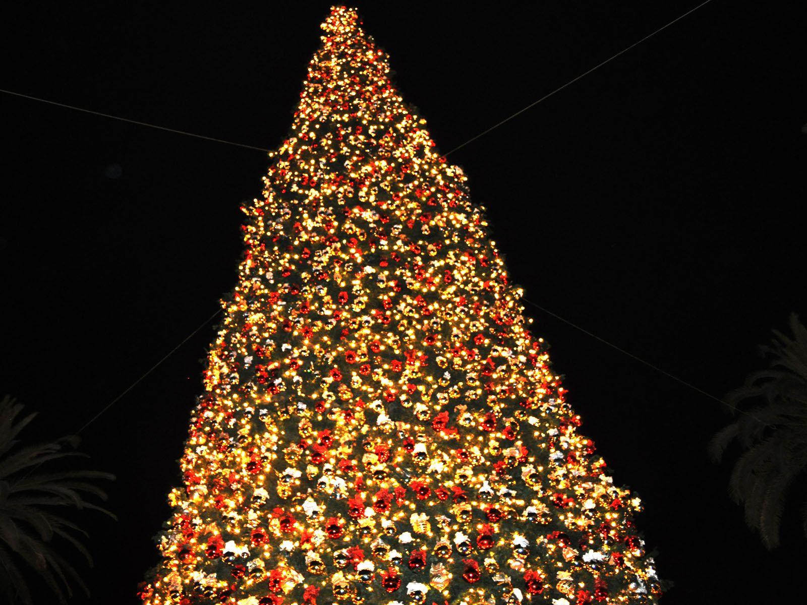 http://images.latinpost.com/data/images/full/4334/christmas-tree.jpg