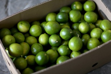 Lime Shortage Causes Drastic Rise In Price