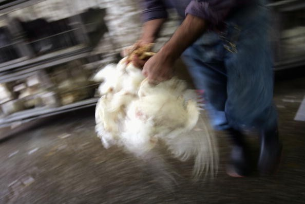 WHO Warns Of Potential Bird Flu Pandemic