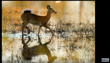 Southeastern Minnesota Chronic Wasting Disease Update