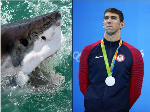 Michael Phelps will race a Great White shark just because he can